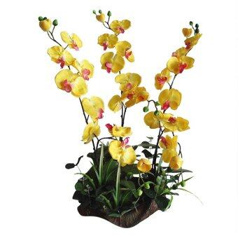 Butterfly Orchid On Natural Wood Trunk Yellow   Lazada Malaysia Yellow Butterfly Orchid