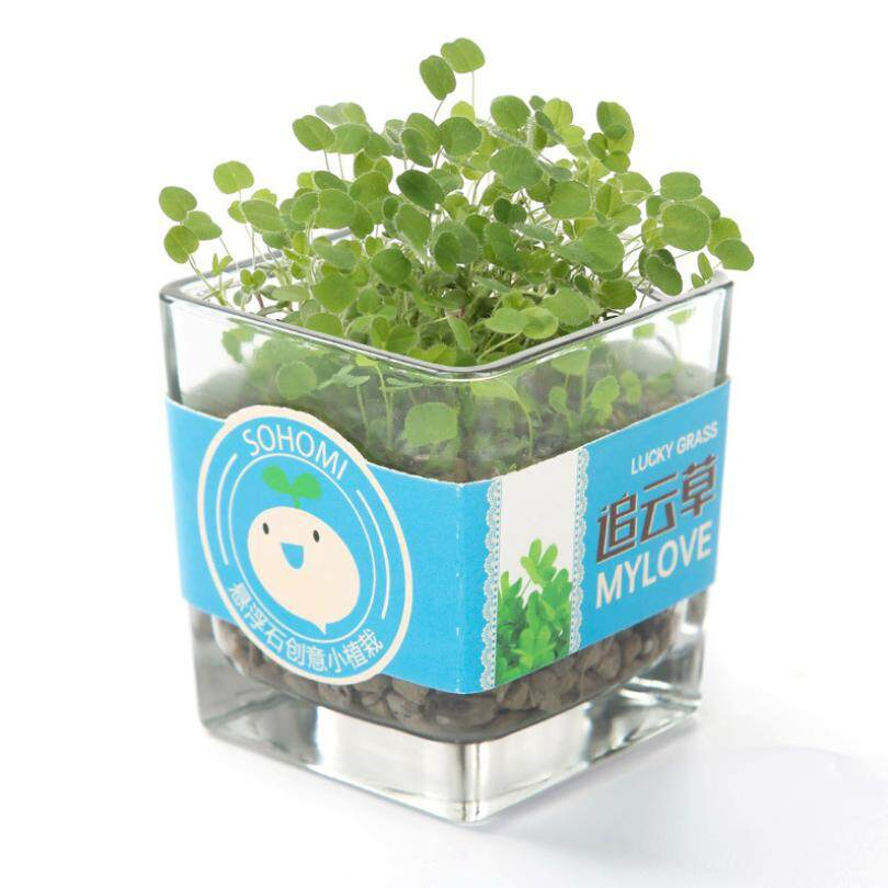 (Fast delivery, good quality) Micro landscape mini cute potted small bonsai, office desktop ecological fruit and vegetable plants