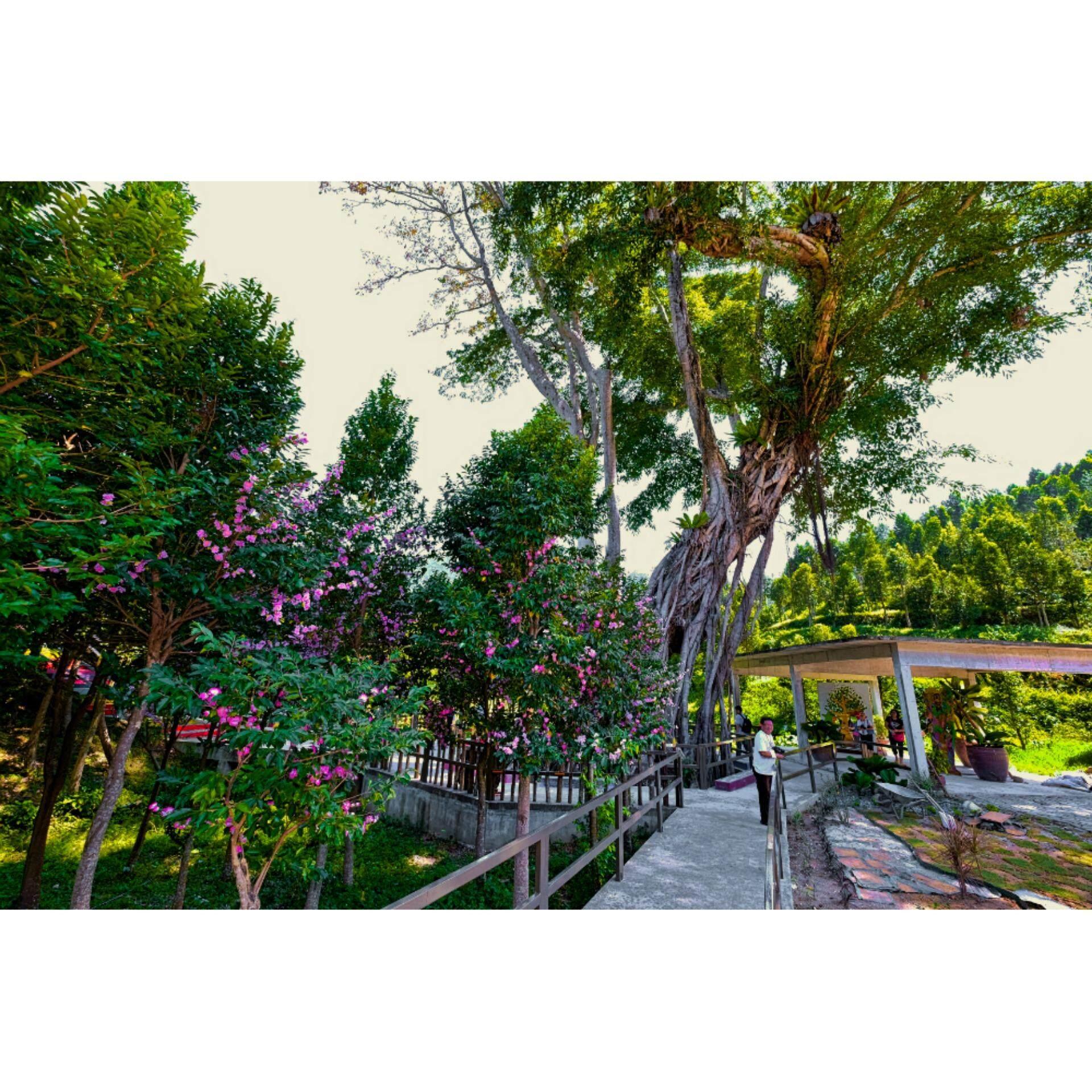 Perak : HOGA Gaharu Tea Valley Experience (FREE HOGA Tea 10 teabags + HOGA Tea Set) - Child