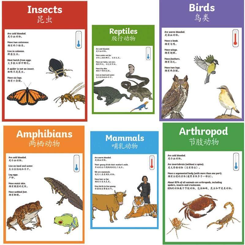 Harga 7 pcs set bahasa inggris bahasa inggris binatang yang hidup poster a4 besar kartu flash