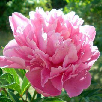 Pencarian Termurah Penjualan Terlaris 10 Pcs Rumah Berkebun Hias Pot Tanaman  Anggrek Biji Bunga-Intl 46a5154a6b