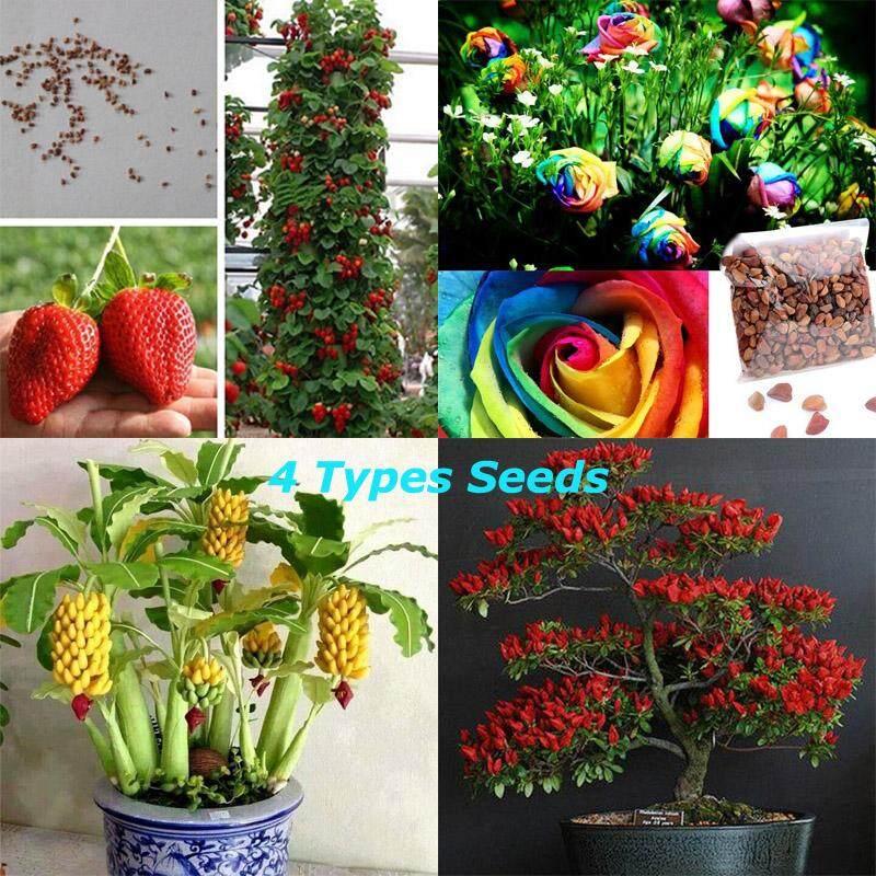 Buy 1 Get 3 Free 4 Types Seeds Rare Dwarf Banana Tree Seeds Mini Bonsai Fruit Exotic Home Garden Plants Intl Singapore