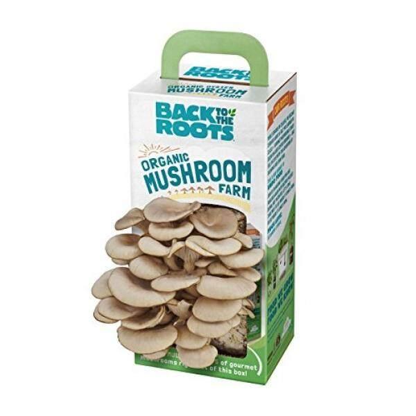 Kembali Ke Roots Organic Alat Pertumbuhan Jamur. DIY Dalam Organik Oyster Mushroom Farm. Tumbuh Dapat Dimakan Mushroom Di Rumah untuk Memasak Gourmet. Memasak Sempurna Hadiah-Internasional