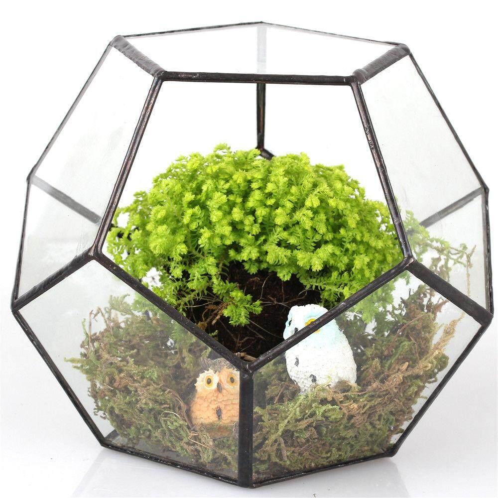 GuangquanStrade 2pcs Modern Glass Geometric Terrarium Box Tabletop Succulent Plant Planter