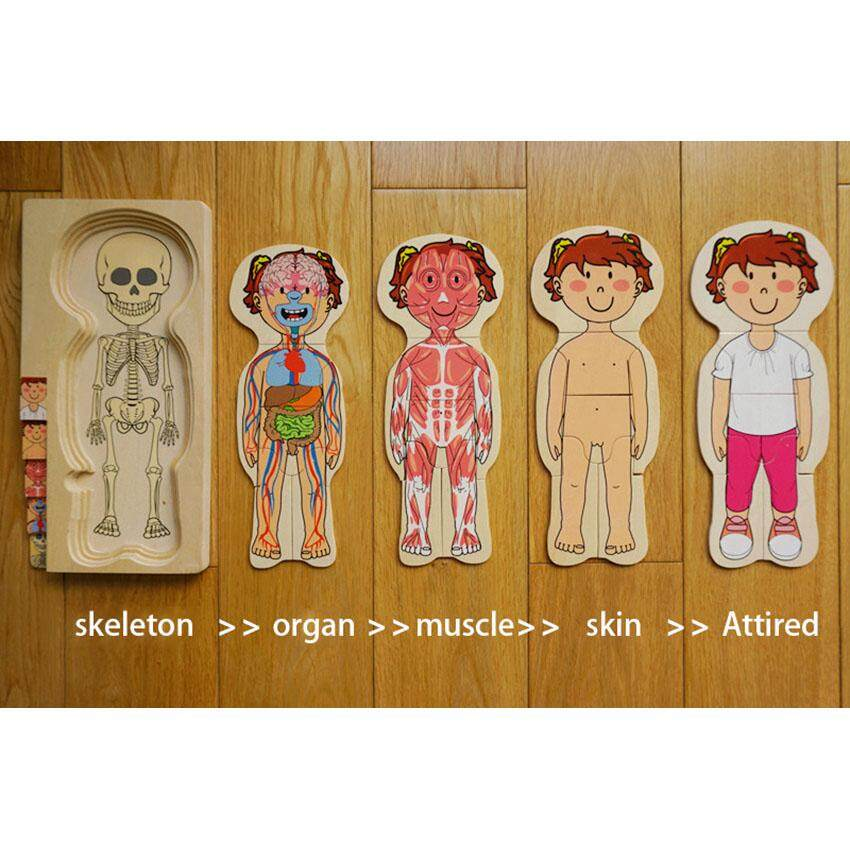Layery puzzle body parts of boy / girl skeleton, organs, muscles, skin, attires 28 pieces