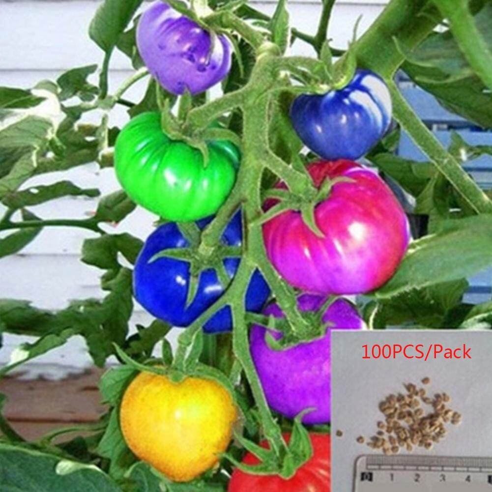 100 Pcs/pack Colorful Tomato Seeds Different Color Flavors Fruit Vegetable Bonsai Seeds DIY Home Garden