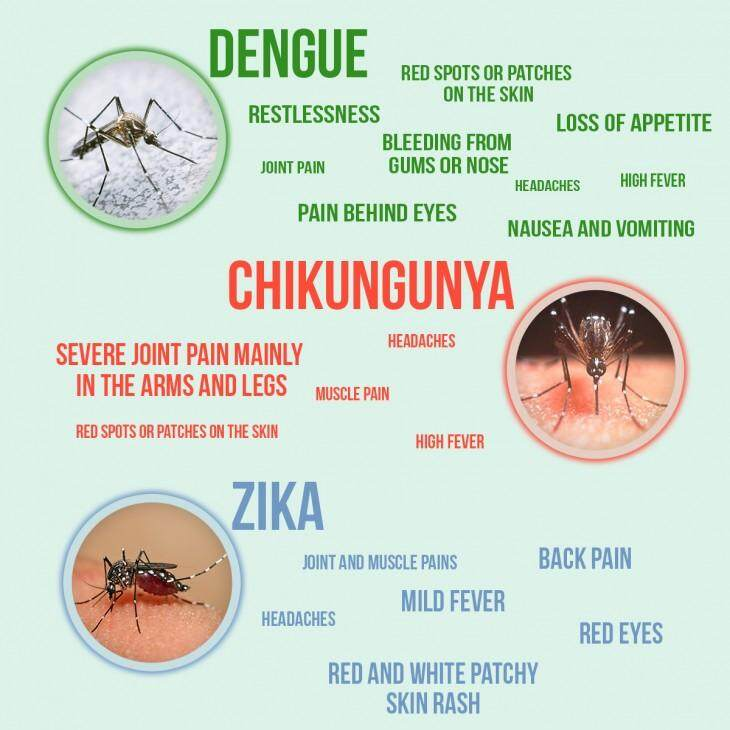 difference-zika-dengue-chickungunya.jpg