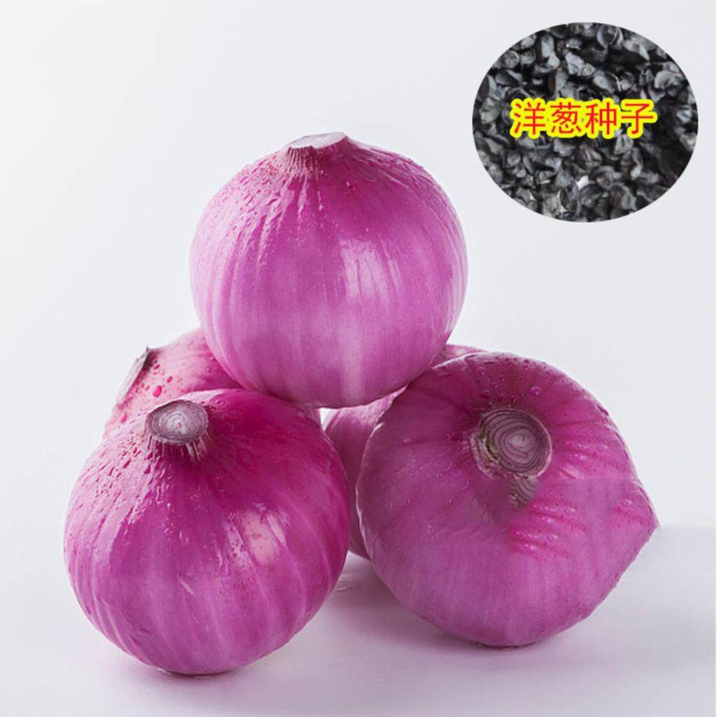 300Pcs Giant Onion Sweet Spanish Seeds Vegetable High Germination Vegetables