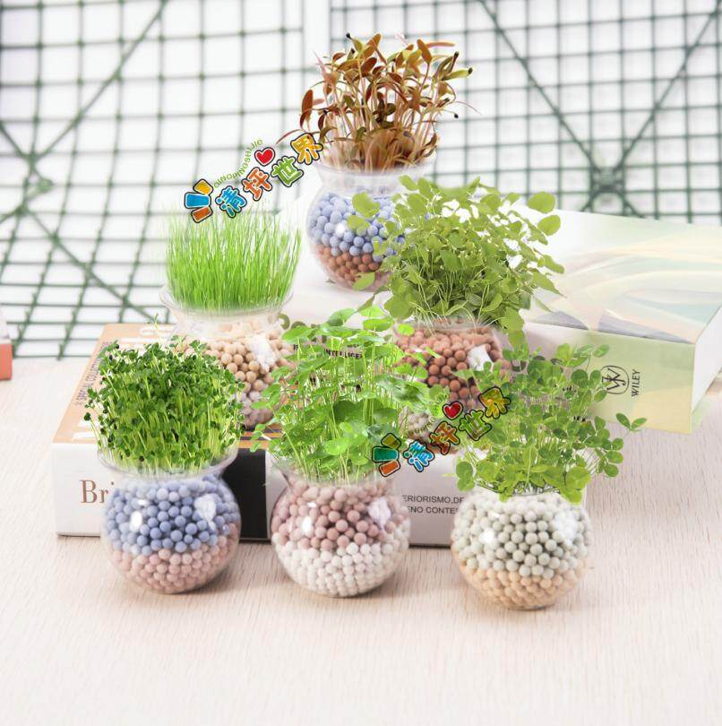 (Fast delivery, good quality) Micro landscape mini cute potted small bonsai, office desktop ecological fruit and vegetable plant - 6Pcs