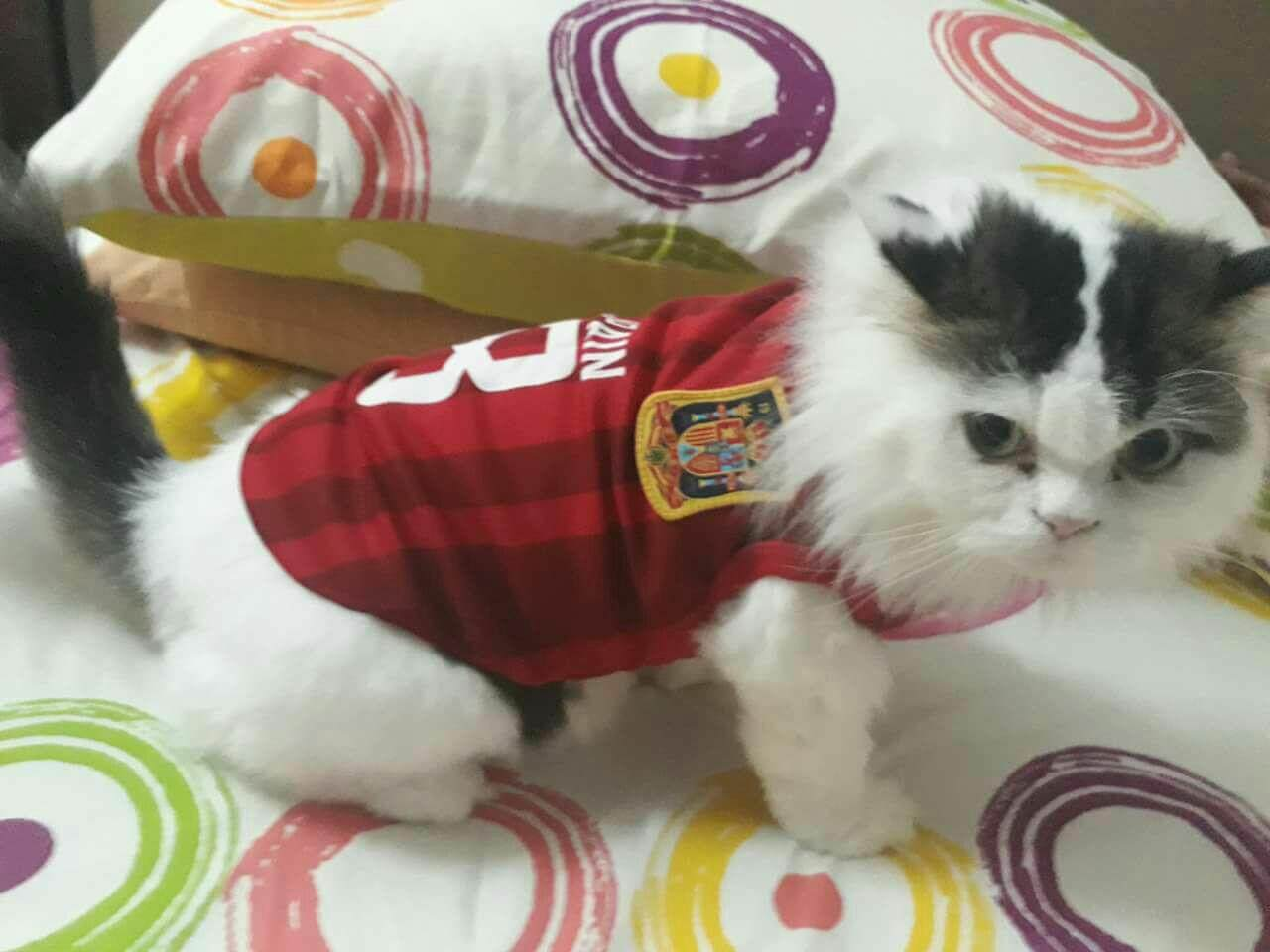 5671c4583a1 world cup jersey spain xl- cats,small/medium breed dogs dogs