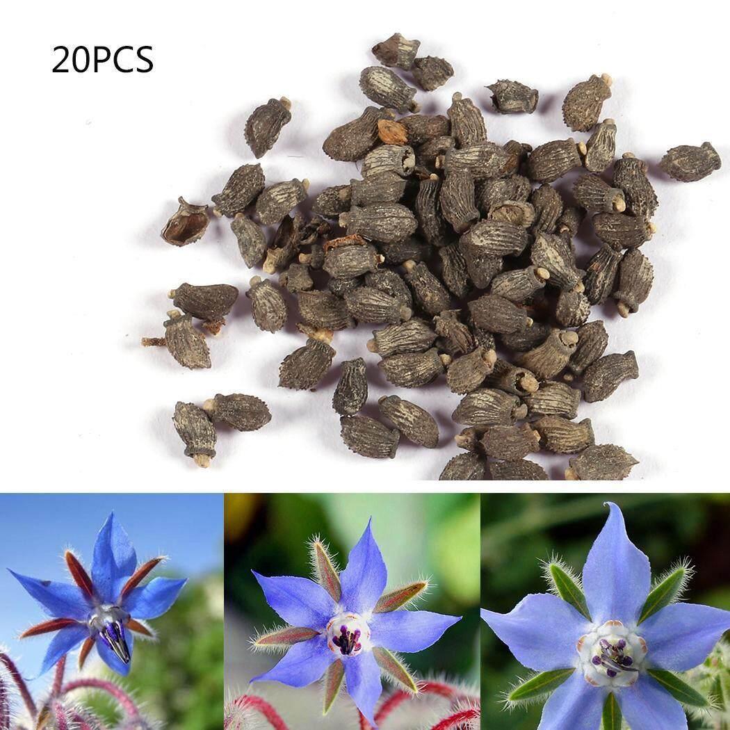 Alami Terlaris Biji Borage Benih Tanaman Herbal Bibit Bunga-Intl