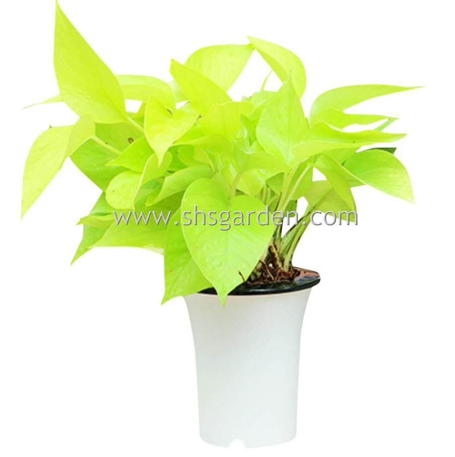 SHS Kebun Self watering Pot Hydroponic Pot for Office and Home Decor (W14)