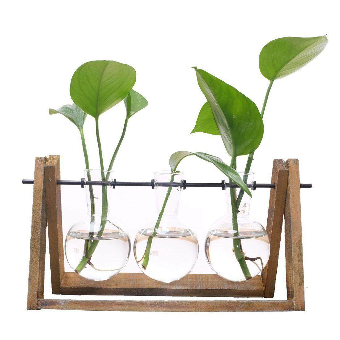 New Plant Terrarium with Wooden Stand Glass Vase Holder for Home Decoration,Scindapsus Container (3 Terrariums)