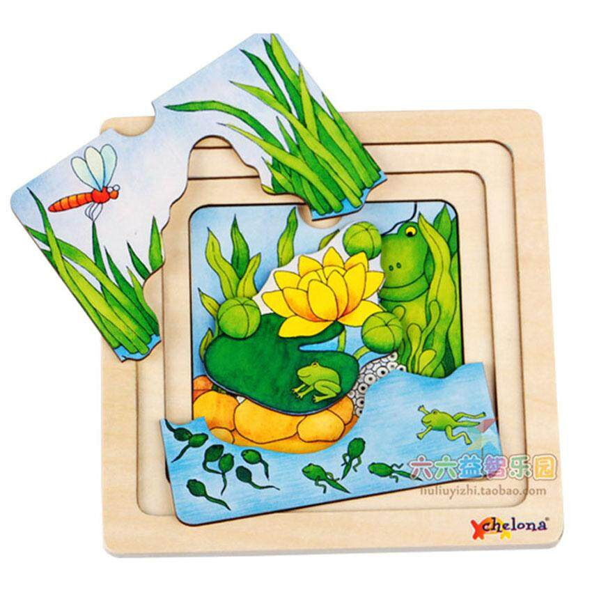 Layer wooden puzzle The growing process of frog , tadpole, egg environment