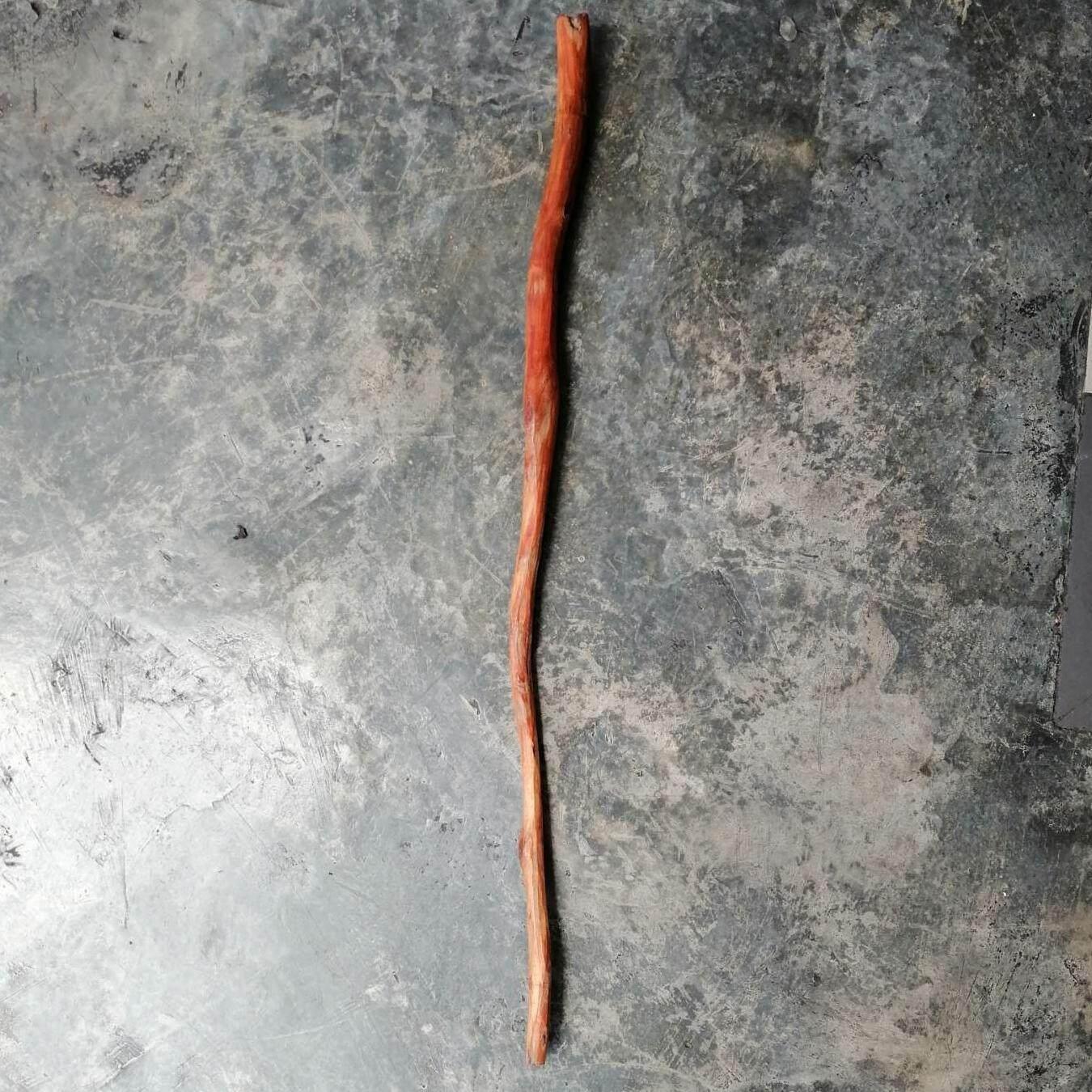 Tongkat Raja Kayu