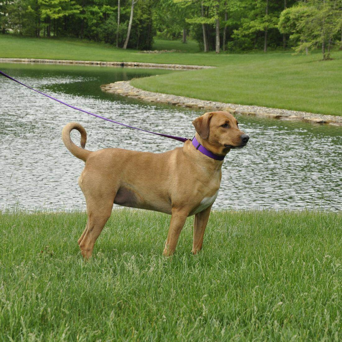 "[Coastal] Adjustable Nylon Dog Collar with Plastic Buckle 1"" L - Blue Lagoon"