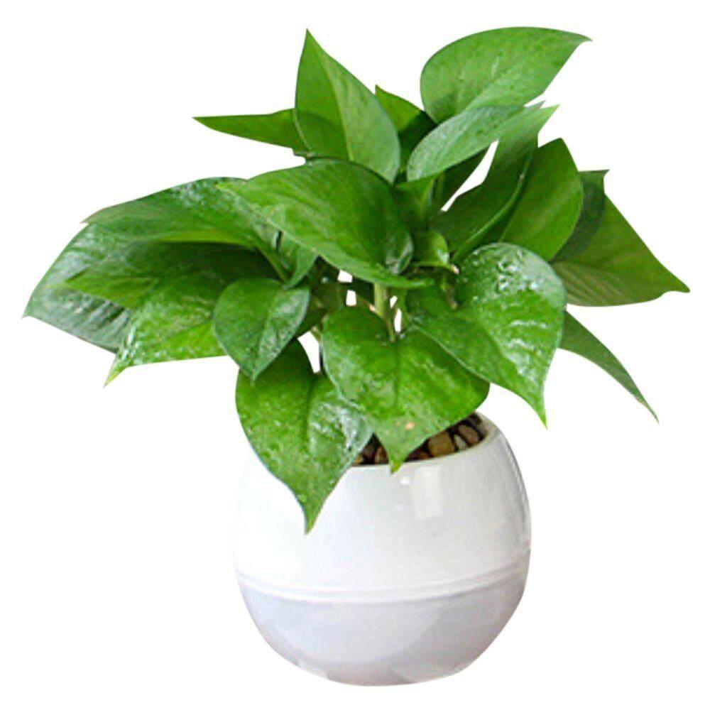 Small Semi-transparent Self watering Pot With Water Reservoir (HTR04W) Hydroponic Pot White Pasu Bertakung Air SHS Kebun