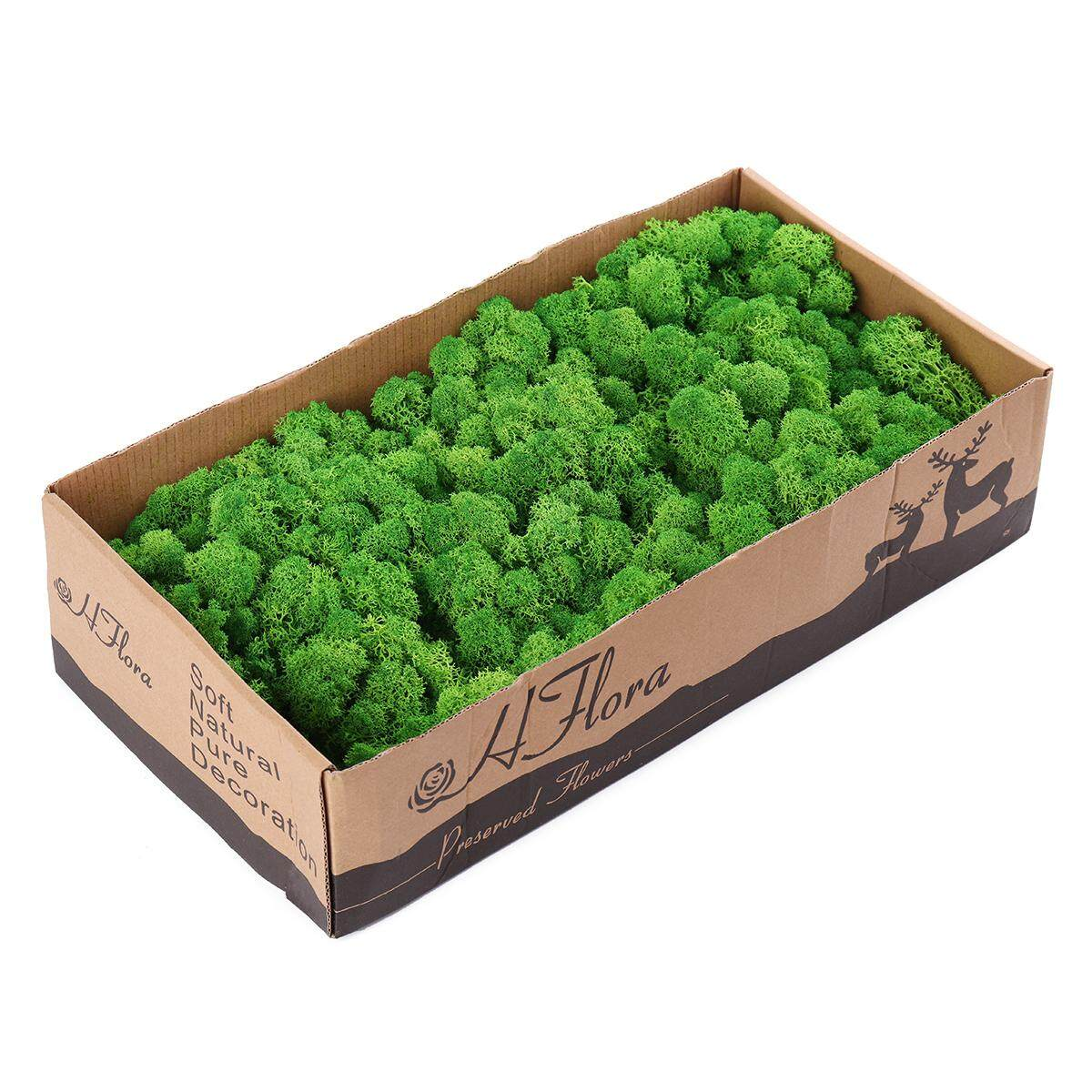 Natural Decoration Norwegian Reindeer Moss Preserved Dried Craft Flower 500g Box