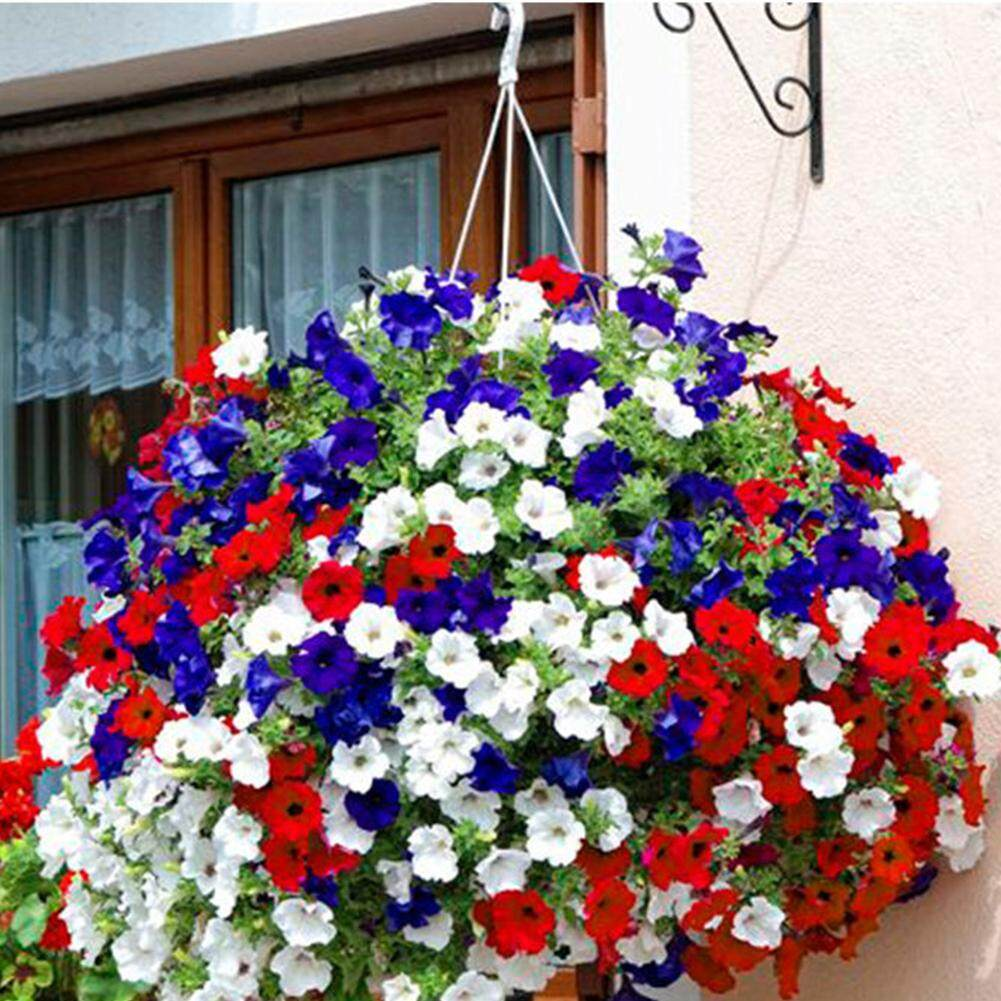 100pcs Petunia Seeds Bonsai Flower Seeds Plant Ornamental For Home Garden By Fashiworld156.
