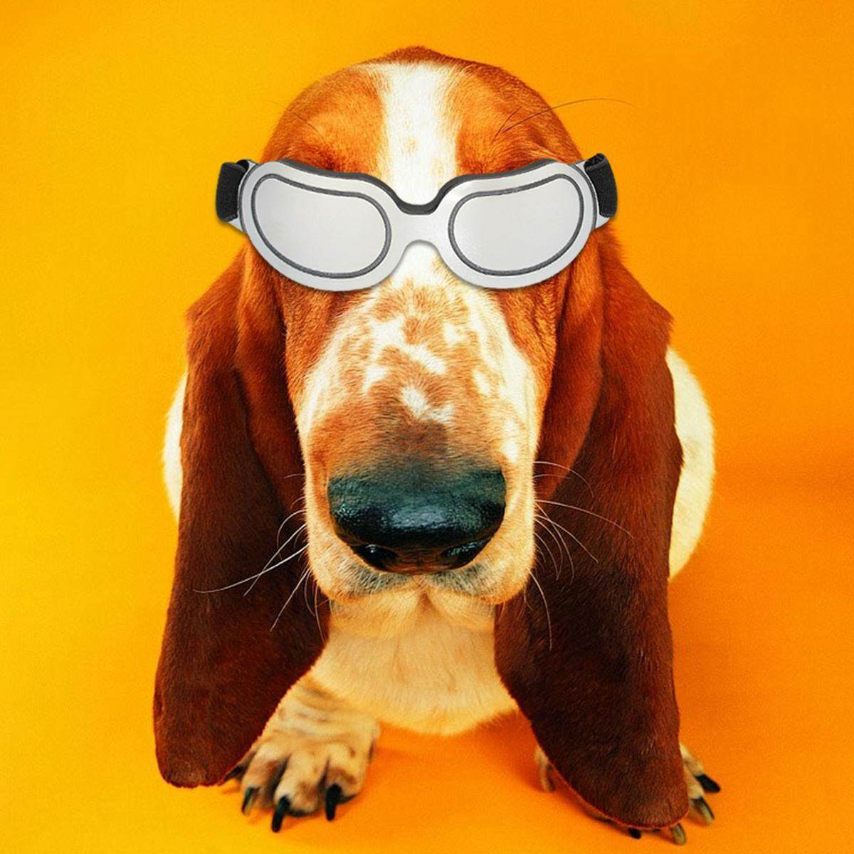 dog with glasses - HD1200×1200