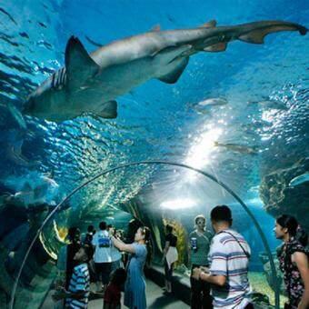 Bangkok Sea Life Ocean World (Child)