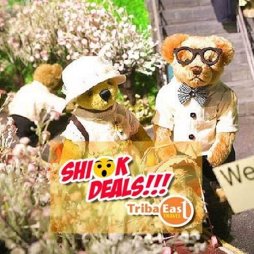 Seoul Teddy Bear Teseum (Adult/Child)