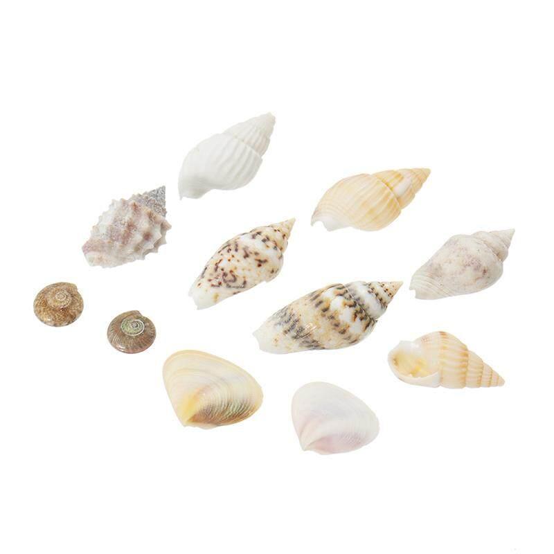 40 Pcs/lot 0.3-1.6 Cm Miscellaneous Kecil Conch Dekorasi Rumah Bahan Kerajinan Alami