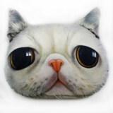 Animal Themed Throw Pillow - Cat Design B
