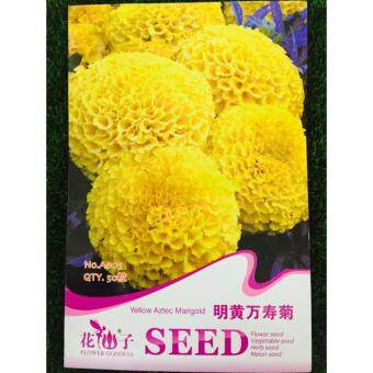 Harga FLOWER GODDESS YELLOW AZTEC MARIGOLD 50SEEDS