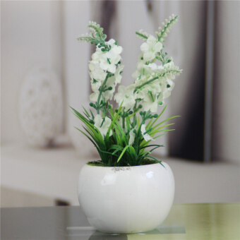 Living room table ideal potted essential clothing grass containingpots suit
