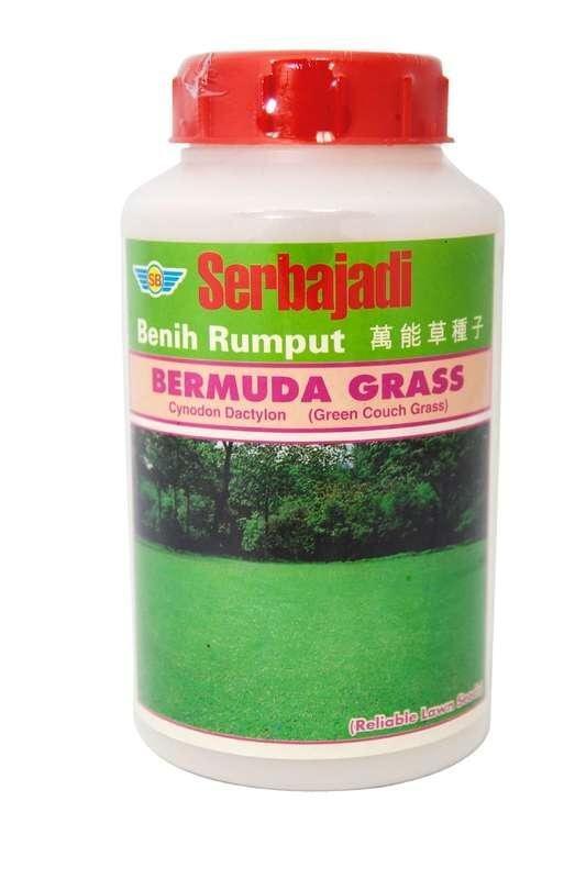 Serbajadi Bermuda Grass (500gm) (approx. 425sq ft)