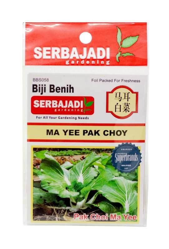 Serbajadi Seeds Curly Dwarf Pak Choy - Maa Yee Pak Choy - BBS058