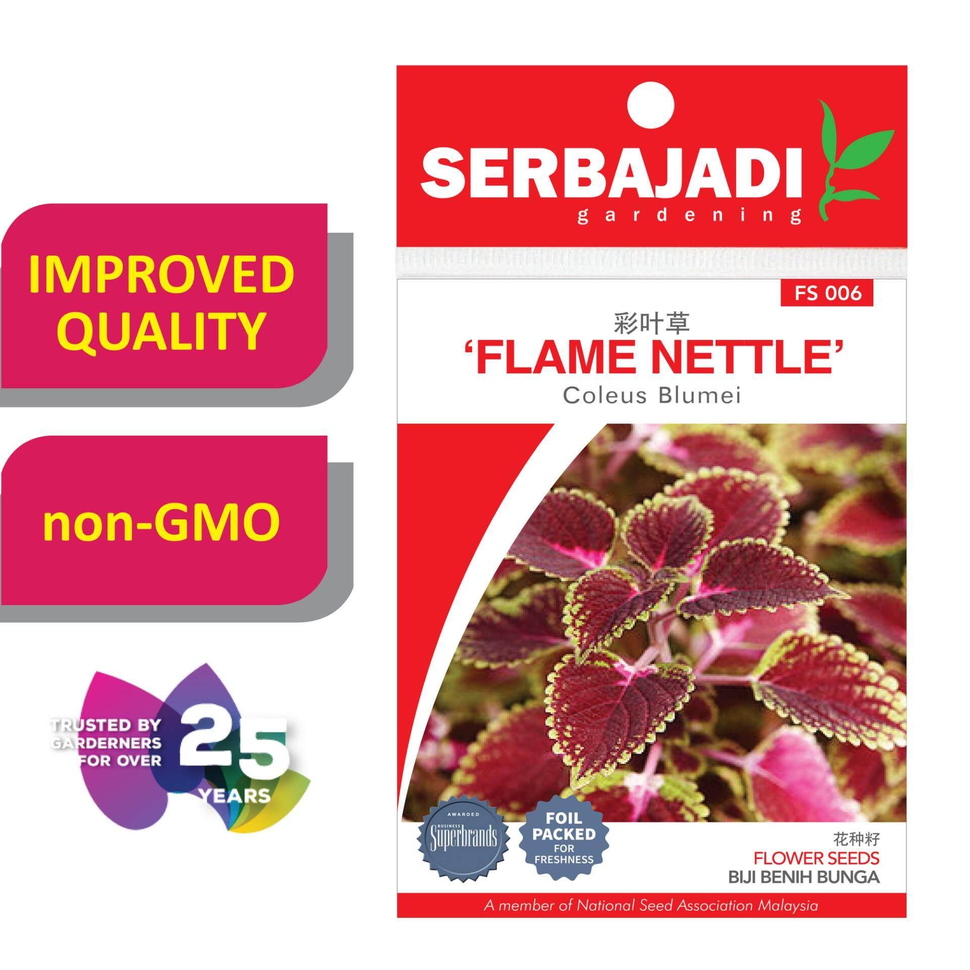 Serbajadi Seeds Flame Nettle FS006