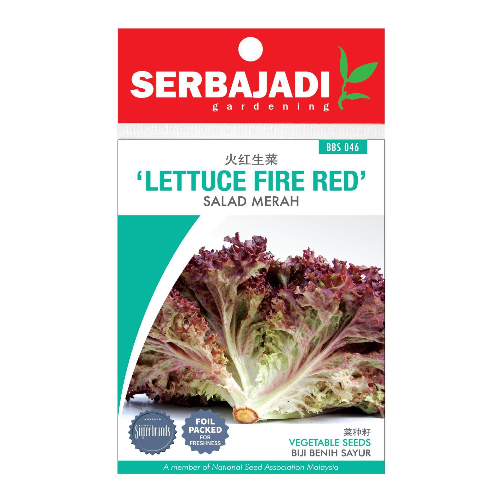 Serbajadi Seeds Lettuce Fire Red ( BBS046 )