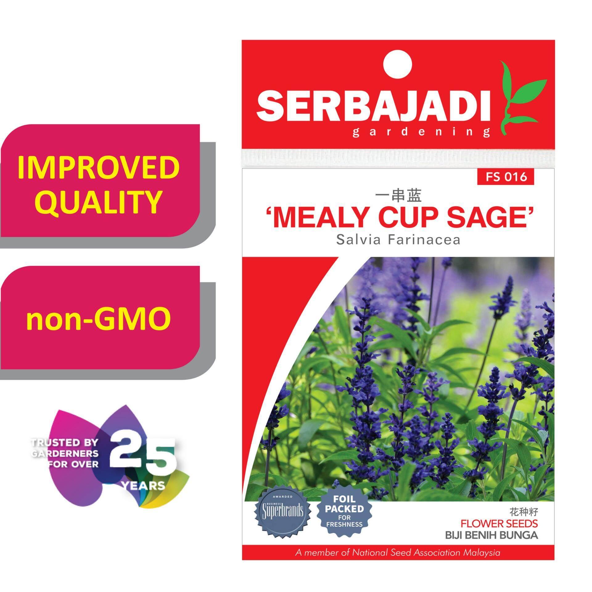 Serbajadi Seeds Mealy - Cup Sage FS016