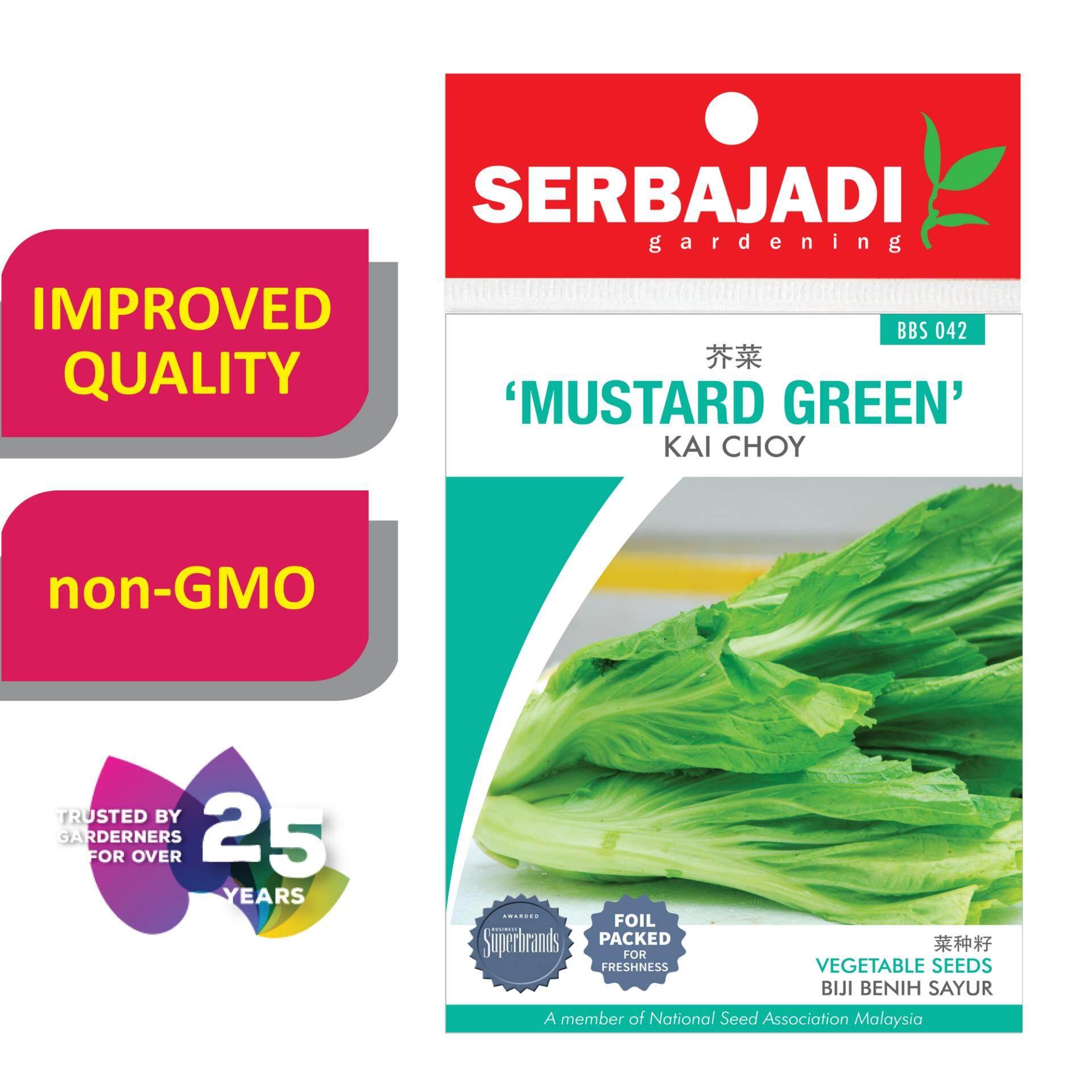 Serbajadi Seeds Mustard Green - Kai Choy ( BBS042 )