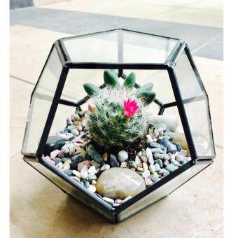 Harga Terrarium Geode Design Medium Copper Frame (Black)
