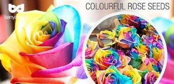 Harga VERY RARE 3X Packs Rare Colorful Rose Seeds - FREE SHIPPING