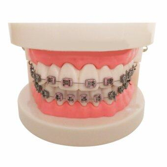 Vinmax Dental Teach Study Adult Oral Demonstration Teeth Model WithBrackets
