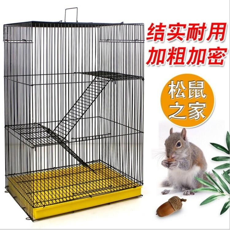 Update Harga (Spot) Totoro Lord Bunga Emas Tupai Terbang Kandang Tupai Hamster Huangshan Salju Guinea Babi Gula Glider Kit Mail Hari Ini