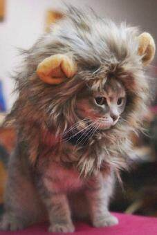 Harga Furry Pet Costume Lion Mane Wig For Cat Halloween Dress Up With Ears Festival
