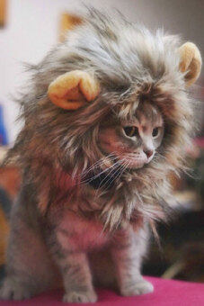 Harga Furry Pet Costume Lion Mane Wig For Cat Halloween Dress Up With Ears Party CUTE