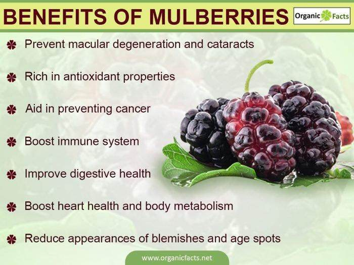 [BEST DEAL] MH FOOD Organic Dried Mulberry 100g (6 Packs)
